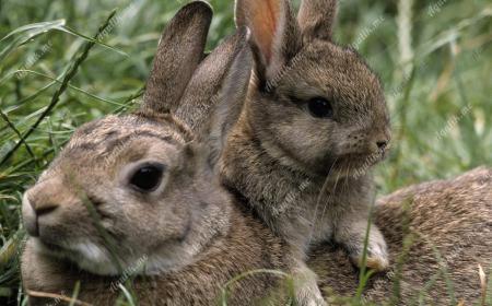 Зайчонок улыбнулся маме