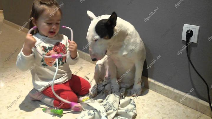 Бультерьер и дети